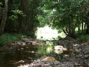 Bridge Creek at Bridge Creek Rd (M. Dunstan)