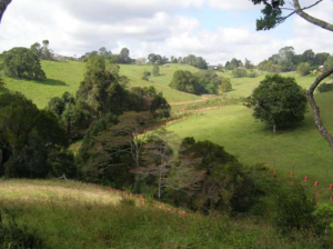 Upper Lawley Creek Restoration revegetation