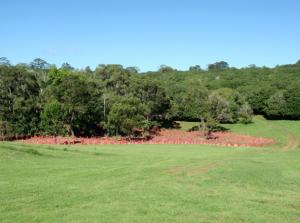 Revegetation site on the Farmhouse Macadamias property